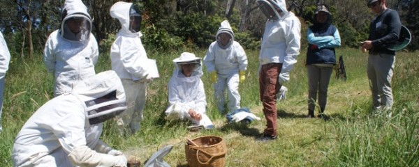 Learn Natural Beekeeping