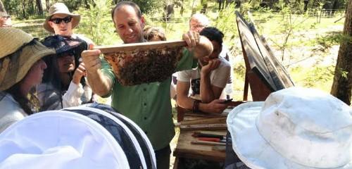 Natural Beekeeping Resources
