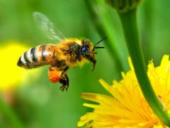 Beekeeper Guild