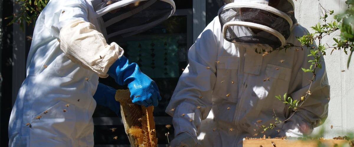 beekeeping-naturally-home-page-0011