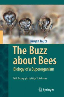 The Buzz About Bees - Jurgen Tautz