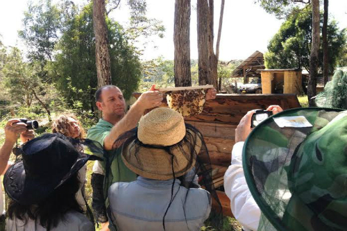 Learn Natural Beekeeping – Melbourne – September 2019
