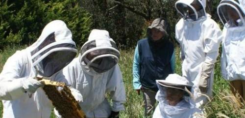 Beekeeping Naturally Courses, Workshops & Top Bar ...