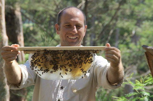 Beekeeping Naturally Course