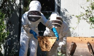 beekeeping naturally australia