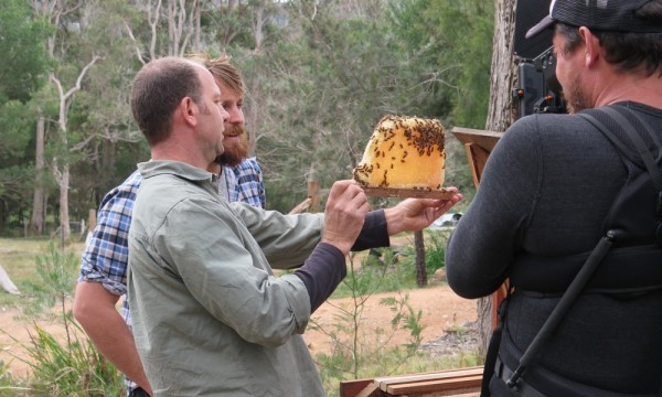 Filming Natural Beekeeping at Bermagui for River Cottage Australia