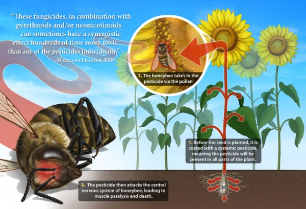 neonicotinoids colony collapse