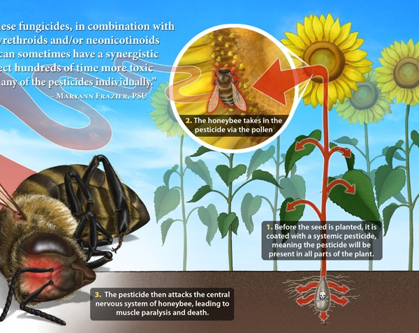 Neonicotinoids – Australian Government List