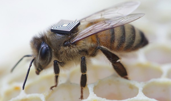 Global Initiative for Honey Bee Health