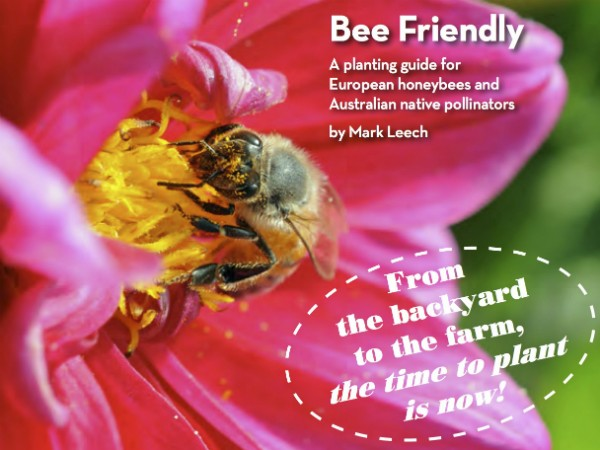 Bee Friendly by Mark Leech