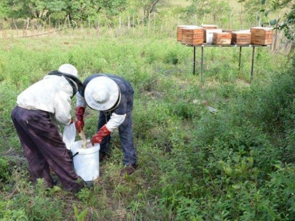 African Beekeeping Stops Mites from Wiping out Hives
