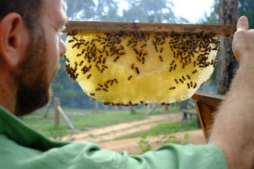 natural-bee-keeping-course-katherine-nt