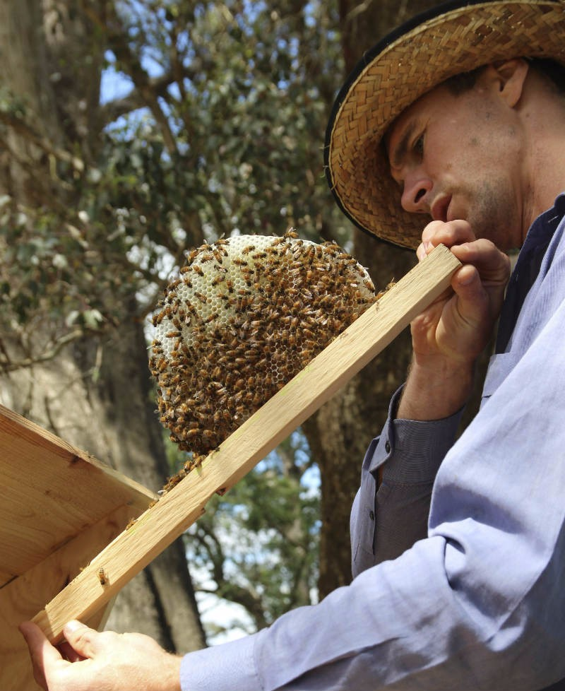 Buy Kenyan Topbar Beehives | Beekeeping ...